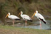 BRD 29 NE0001 01