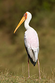 BRD 29 NE0002 01