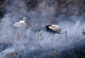BRD 29 TL0001 01