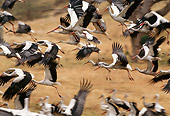 BRD 29 TL0003 01