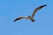 BRD 30 AC0010 01