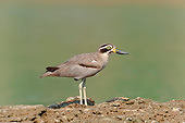 BRD 30 AC0012 01
