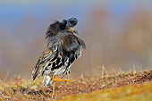 BRD 30 AC0014 01
