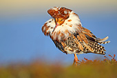 BRD 30 AC0015 01
