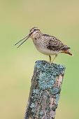 BRD 30 AC0026 01