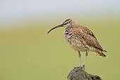 BRD 30 AC0027 01