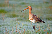 BRD 30 AC0033 01