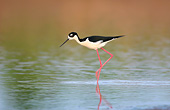 BRD 30 DA0001 01
