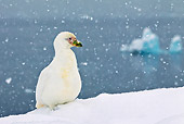 BRD 30 KH0012 01