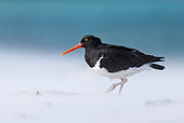BRD 30 KH0014 01