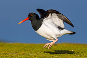 BRD 30 KH0015 01