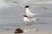 BRD 30 LS0002 01