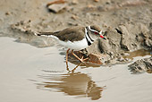 BRD 30 MC0001 01