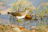 BRD 30 MC0009 01