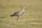 BRD 30 RF0002 01