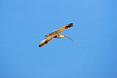 BRD 30 RF0003 01