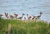 BRD 30 RK0035 01