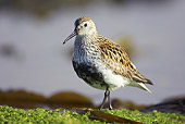 BRD 30 WF0003 01