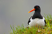 BRD 30 WF0005 01
