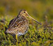 BRD 30 WF0008 01