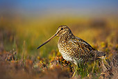 BRD 30 WF0009 01