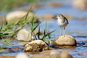 BRD 30 WF0011 01