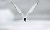 BRD 30 WF0012 01