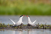 BRD 30 WF0018 01