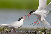 BRD 30 WF0019 01