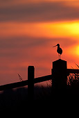 BRD 30 WF0021 01