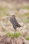 BRD 30 WF0025 01
