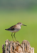 BRD 30 WF0029 01
