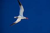 BRD 30 RK0039 17