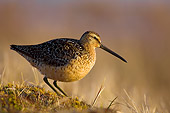 BRD 30 SK0004 01