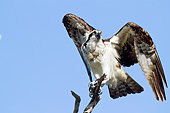 BRD 31 LS0002 01