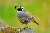 BRD 32 TL0001 01