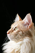 CAT 01 AB0005 01
