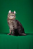 CAT 01 CH0001 01