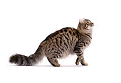 CAT 01 CH0004 01