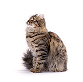 CAT 01 CH0005 01
