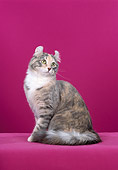 CAT 01 CH0007 01