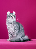 CAT 01 CH0012 01