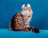 CAT 01 CH0013 01