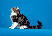 CAT 01 CH0014 01
