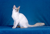 CAT 01 CH0020 01