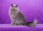 CAT 01 CH0022 01