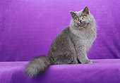 CAT 01 CH0023 01