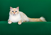 CAT 01 CH0025 01