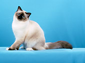 CAT 01 CH0028 01