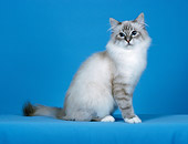 CAT 01 CH0030 01